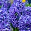 Hyacint Blue jacket 2