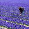 Hyacint Blue jacket 3
