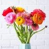 Ranunculus mix 05