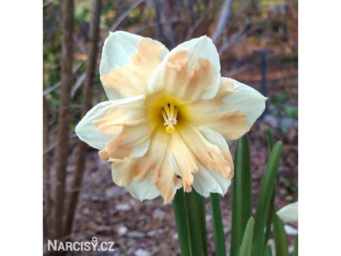 Narcis Cum Laude 1