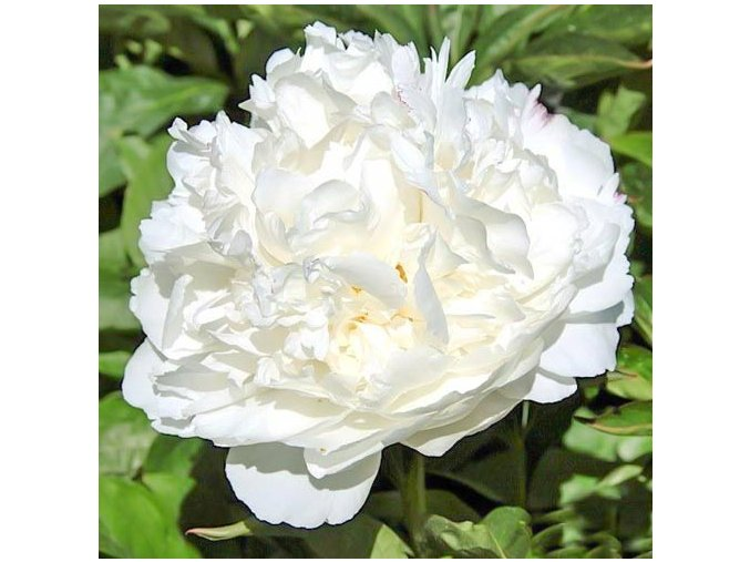 White 05