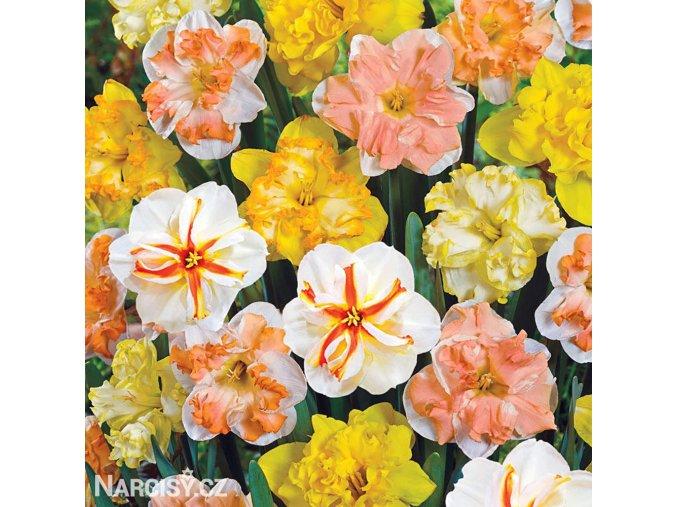 Narcis Split Corona mix 9