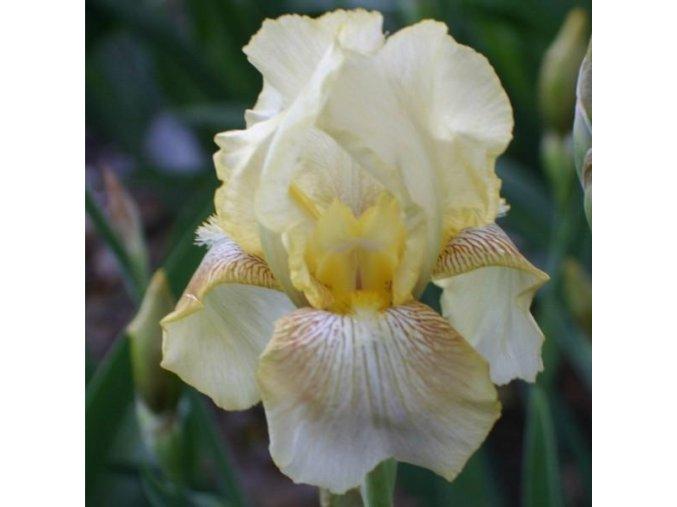 Iris dawn of fall 01