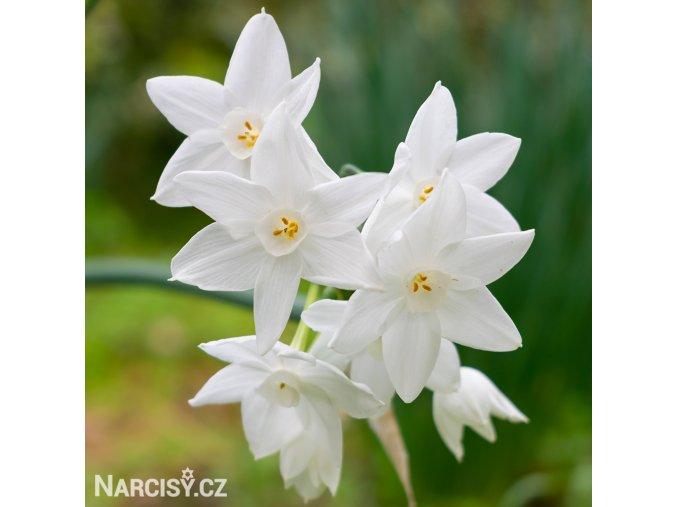 Narcis - Mischii