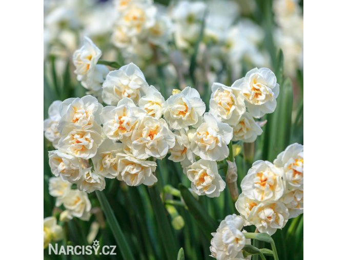 Narcis Bridal Crown 2