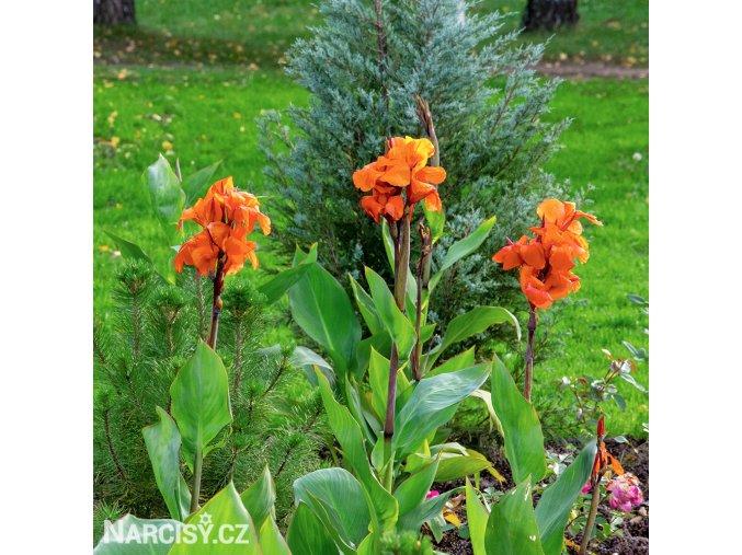 Dosna Orange Beauty 04