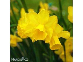 Narcis Quail 1