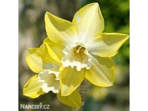 Narcis Sailboat lemon 1