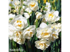 bílý plnokvětý narcis sir winston churchill 5