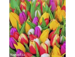 tulipan venkovsky smes barev mix 4