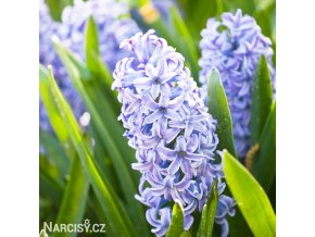 Hyacint Sky Jacket 1