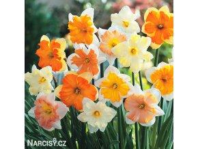 narcisy směs orchideokvětých split 1