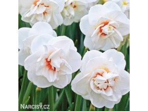 Narcis Acropolis 1