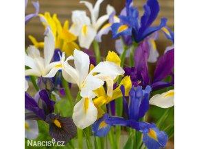 holandské kosatce směs iris hollandica mix 1