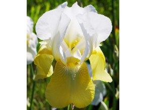 Iris Pinnacle 01