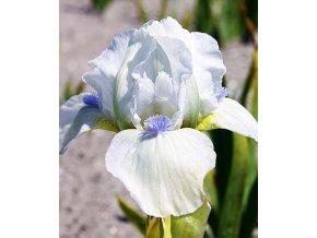 Iris Westar 02