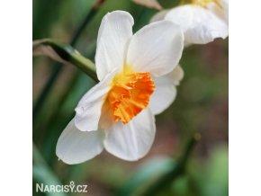 Narcis Barret browning 3