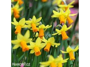 Narcis Jetfire 2