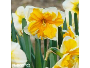 Narcis Orangery 4