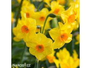 Narcis Martinette 1