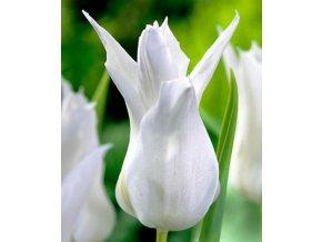 Tulipany Tres chic 1