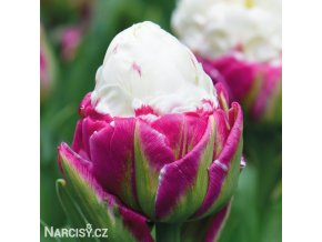 biloruzovy tulipan ice cream 7