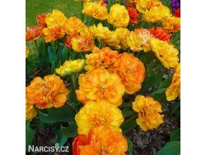 Tulipany Sunlover 5