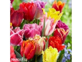 trepenite tulipany smes barev mix 1