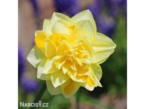 plnokvětý narcis grat leap 6
