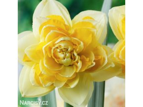 Narcis Great Leap 1