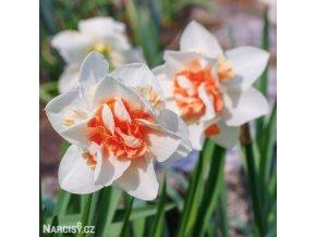 Narcis Replete 1
