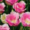 ruzovy trepenity tulipan fancy frills 4