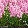 ruzovy hyacint fondante 2