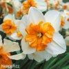 bílooranžový narcis split parisienne 3