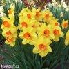 Narcis Red Devon 3