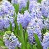 Hyacint Sky Jacket 2
