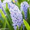 svetle modry hyacint sky jacket 3