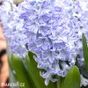 svetle modry hyacint sky jacket 4