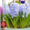 svetle modry hyacint sky jacket 5