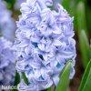 svetle modry hyacint sky jacket 1