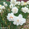 Narcis - Acropolis
