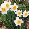 Narcis June Allyson 2