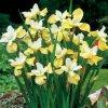 Iris Butter & Sugar 03