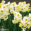 Narcis Minnow 3
