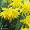 Narcis Rip van winkle 4