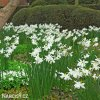 Narcis Thalia 5