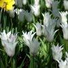 Tulipany Tres chic 3