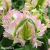 Tulipan Green wave 4
