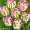 Tulipan Green wave 5