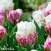 biloruzovy tulipan ice cream 6